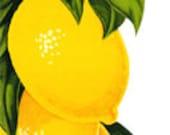 Lemons Fruit Blossom Flowers - Vintage Art Illustration - Digital Image - Instant Download