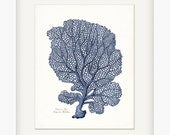Coastal Decor Sea Coral Venus Sea Fan Coral Natural History Wall Decor Art Print 8x10 Indigo Blue