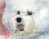 "Bichon Frise', Fluffy White, AKC Non Sporting, Pet Portrait Dog Art Watercolor Painting Print, Wall Art, Home Decor ""Curly Cue"" Judith Stein"