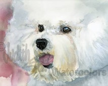 """Bichon Frise', Fluffy White, AKC Non Sporting, Pet Portrait Dog Art Watercolor Painting Print, Wall Art, Home Decor """"Curly Cue"""" Judith Stein"""