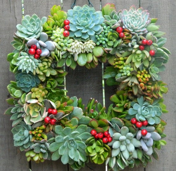 """Succulent Wreath Holiday Succulent Wreath  - 15 """" Square Succulent Wreath Perfect Christmas Gift or Christmas Decor"""