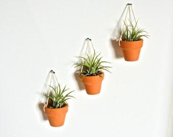 Three Mini Hanging Ceramic Pots with Air Plants, Pottery Hanging Planters, Hanging Airplant Planters, Hanging Pottery Planters, Wall Decor