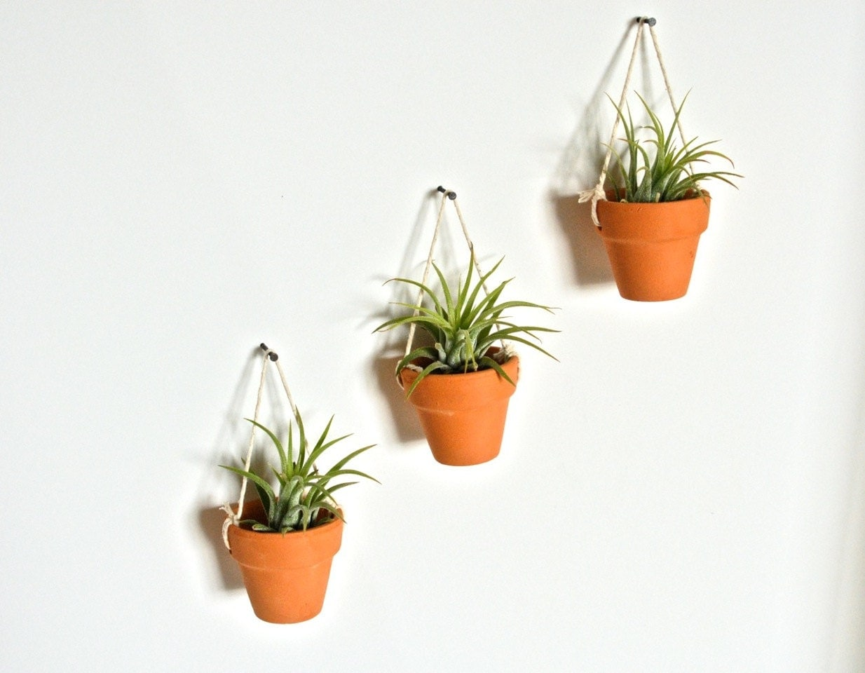 three mini hanging ceramic pots with air plants pottery. Black Bedroom Furniture Sets. Home Design Ideas