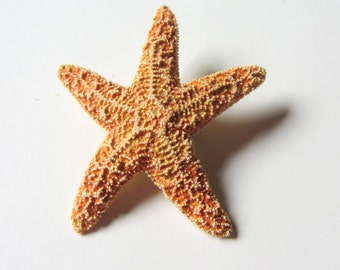 Beach Wedding Starfish Boutonniere, Dress Pin, Hat Pin - Small Sugar Starfish