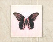 Butterfly Photograph, Pink and Black Decor, Nature Photography, Girly Nursery Art, Square Wall Art,  Butterfly Picture