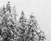 Winter Photography, Ski Lodge Decor, Black and White Photograph, Oversized Wall Art, Snow Picture, Tree Photo, Christmas Picture