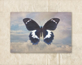 Butterfly Photograph, 5x7 Photography, White, Blue and Black Wall Art, Sky Picture, Still Life Print, Cloud Photo