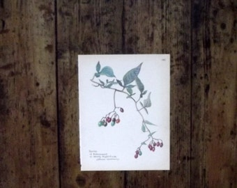 Woodland wall hanging home decor berries of woody nightshade cottage chic paper engidh illustration country garden british  Dolly Topsy Etsy