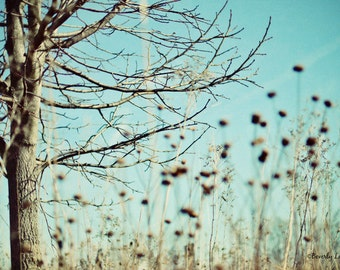 blue, brown, teal, nature, fine art photography