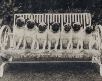 Seven Pugs on a Bench Print Decoupaged on Wood