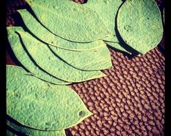 50 Wildflower Seeded Handmade Paper Leaf Favors