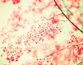Nature photography, Cherry blossom art, large art, large wall art, coral prints, neutral nursery decor, office decor, girly wall art