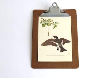 Vintage Bird Drawing, 1950s