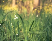 Spring Photography, Nature Photograph, Botanical Print
