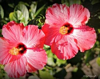 Hibiscus Print / Hibiscus Flower Photo / Hibiscus Picture / Flora / Free US Shipping