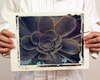 Polaroid Transfer.  Aeonium Succulent Macro Photograph. Large Format  8X10 Polaroid Film Printed on Ceramic Sheet.   OOAK
