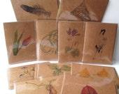 Botanical and Nature Art Note Card Sets – Set of 5