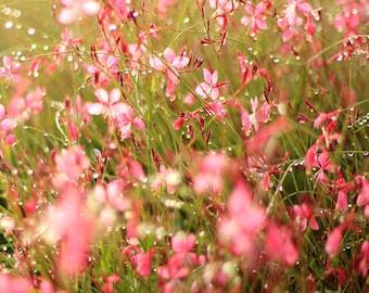 Sparkling Floral Sunrise - Flower Photo Print - Size 8x10, 5x7, or 4x6