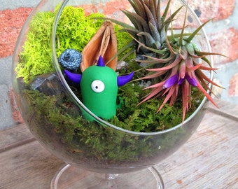 Timid Monster Air Plant Terrarium - A Lovely Mothers Day Gift  or Birthday Gift