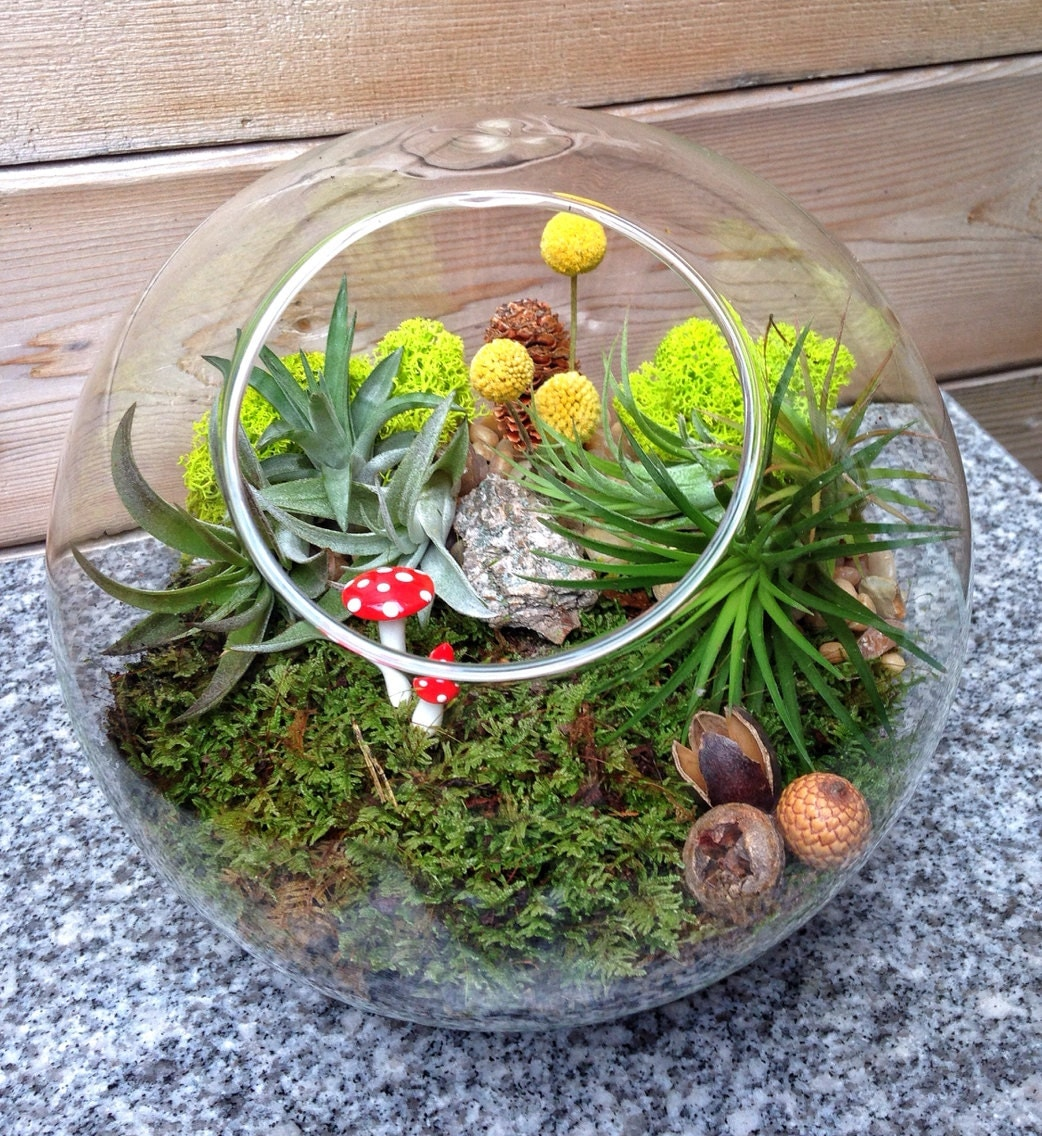 Large 8 Modern Sphere Air Plant And Moss Terrarium A Wonderful  # Terrarium Dangle