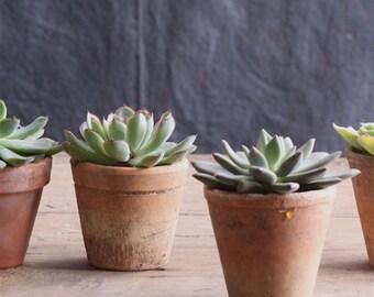 Little Flower Pots (Set of 4)