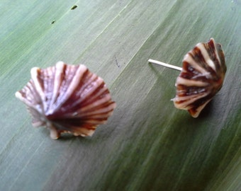 Kauai opihi shell earrings hawaii hawaiian handmade natural