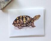 Turtle Card (4.25'' x 5.5'')