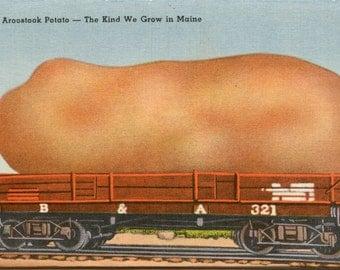 Giant Aroostook County Maine Potato - Vintage Photo Print, Ready to Frame!