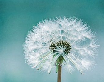 Image result for dandelion puff ball