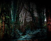 Irish Landscape Photography Rustic Forest Woodland County Wicklow Home Decor Print