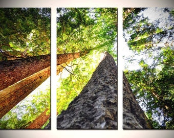 """Nature Triptych, Fine Wall Art, Oregon Woods in green, yellow, brown - """"Up"""""""