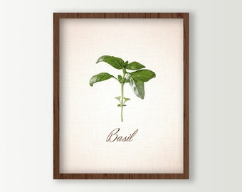 Kitchen Art - Herbs Kitchen Decor - Basil Leaves Culinary Prints - Food Art - Green Kitchen Decor - Cooking Herbs Wall Art - Kitchen Sign