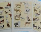Dog Breed Illustrations, 3 Original Dog Colorplate Vintage Reference Book Pages
