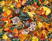 Autumn Spice Essential Oil Potpourri