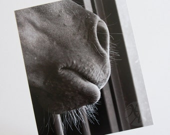 Horse's Nose - Photographic Print