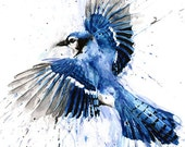 BLUE JAY PAINTING - watercolor blue jay, blue jay art, bird art, bird painting, bird lover, blue bird, bird decor, bird print, bird portrait