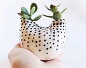 White and Black Ceramic Vase - Ceramic Planter - Ceramics and Pottery - White Housewares - PotteryLodge