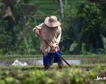 Indonesia - Bali - Ubud - Rice Fields - Fine Art Photography Modern Wall Art in Various Sizes 8x10, 8x12, 11x14, 12x18, 16x20, 16x24