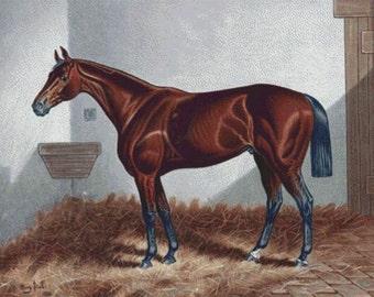 Chestnut Horse PDF Cross Stitch Pattern