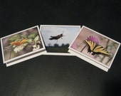 Insect Series - Set of 6 Cards - FREE Shipping