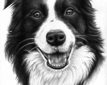Border Collie - Fine Art Print 30x40cm