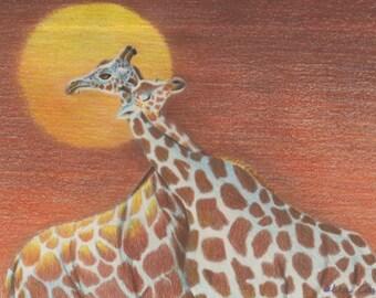 Giraffe Couple in Sunset