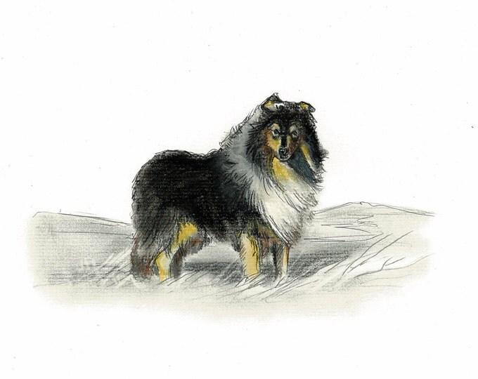 Rough Collie - Sheltie Dog Art Vintage Style Print