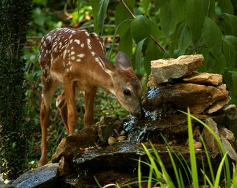 Fawn at the waterfall