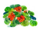 orange flowers, bright flowers, picture with flowers, watercolor orange nasturtium, romance, spring,valentines