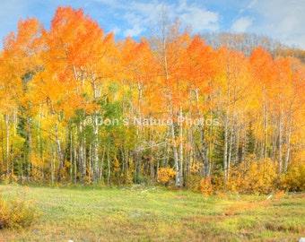 Fall near Grand Mesa, Colorado. Wonderful colors. #4004