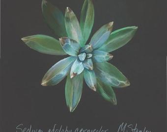 Print of an original pastel drawing of a succulent