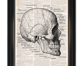 Skull Diagram Dictionary Art Print. Medical Anatomy Dictionary page print. On vintage book page 8x10 inch size. Buy any 3 prints get 1 Free!