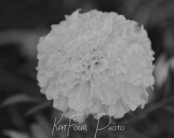 Fine Art Print, Black and White Marigold Photo, Marigold Art, Home Decor, Nature Photography, Floral Decoration, Macro Photography