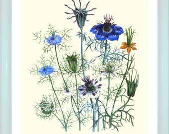 Botanical Print. Blue Flower Print. Nigella. Flower Art. Botanical Wall Art. 8x10""